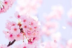 春本番を迎えましたね。